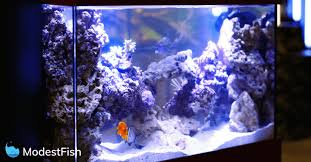 led reef lighting reviews best aquarium led lighting for reef planted tanks 2018 reviews