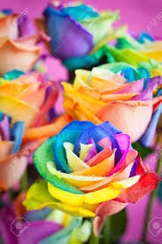 colored roses bouquet of multi colored roses rainbow stock photo picture