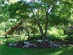 Backyard Tree Ideas Backyard Trees Large And Beautiful Photos Photo To Select