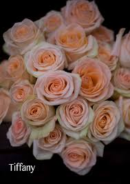Peach Roses The Peach Rose Study Flirty Fleurs The Florist Blog