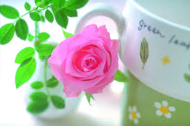 Rose Flower Images Flowers Images
