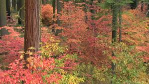 multi colored leaves on various trees stock footage 1732522