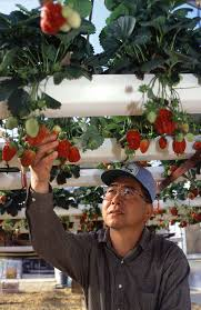 research and commercial greenhouses information engineering360