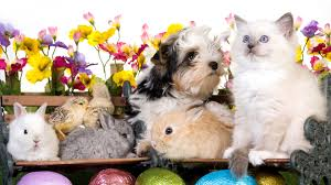 download wallpaper 3840x2160 animals easter eggs benches