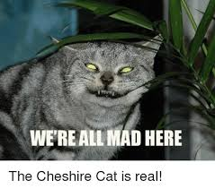 Mad Cat Memes - we reall mad here the cheshire cat is real meme on me me
