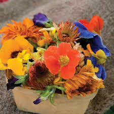 edible flowers edible flower collection seed johnny s selected seeds