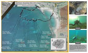 Map Of Coral Reefs Senior Project U201cadopts U201d Coral Disease And Asks What Can We Do