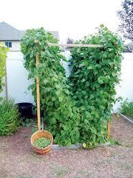 trellis garden sizemore