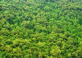 Trees Worldwide Yale Study Finds 3 Trillion Trees Worldwide Woodworking Network