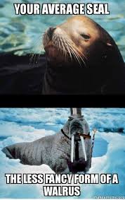 Walrus Meme - your average seal the less fancy form of a walrus make a meme
