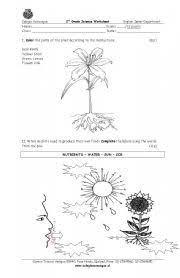 best 25 parts of a plant ideas on pinterest plant parts parts