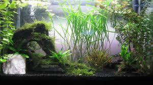 Java Moss Aquascape How Do I Keep My Java Moss Clean Plantedtank