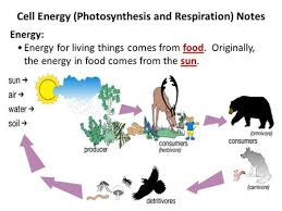 Photosynthesis And Cellular Respiration Worksheet Photosynthesis And Respiration Ppt