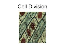 cell division ppt video online download
