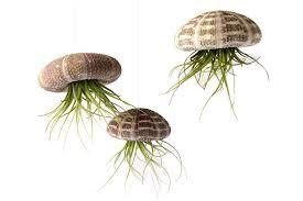 amazon com fresh flowers u0026 live indoor plants grocery u0026 gourmet