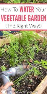 vegetable garden irrigation how to water a vegetable garden