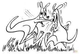 drawn kangaroo boxing kangaroo pencil and in color drawn