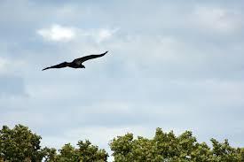 birds u2013 backyard ecology challenge