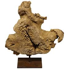 abstract wooden sculpture made of solid of teak root for