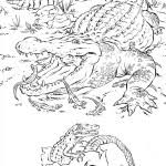 amazing alligator coloring wallpapers fantastic