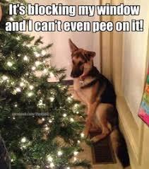 Christmas Dog Meme - christmas trees up humming a running blog