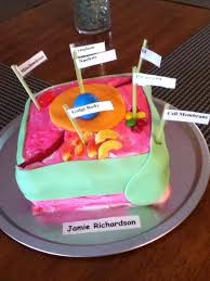 animal cell cake ideas 28 images 1000 ideas about edible
