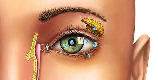 eye anatomy an easy guide to your eye lenstore co uk