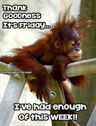 Friday Night Meme - hectic week weekends pinterest happy friday tgif and humour