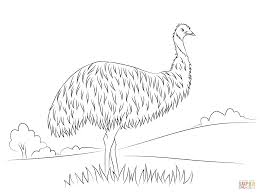 cute emu coloring page free printable coloring pages