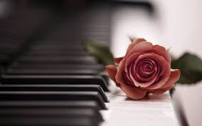 music roses nature piano love flower bouquet