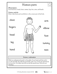 kindergarten math worksheets and 3 more makes body parts