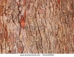 tree bark texture pattern wood rind stock photo 635910491