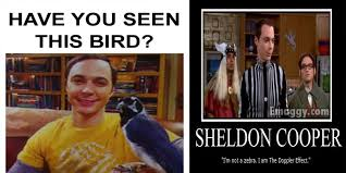 Theory Of Memes - funniest big bang theory memes this will make you laugh over and