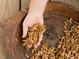 how to collect and harvest seeds how tos diy