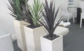 home layout ideas uk plant home office ts for an desk wonderful best plants and uk