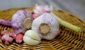 memperbesar kelamin pria dengan bawang putih agen produk pembesar