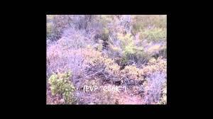 Shinner Evp Captured At Jacob Shinner Burial Memorial Site Mount Baldy