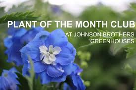 plant of the month club plant of the month club johnson brothers
