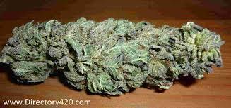 marijuana strain guide directory420 com