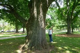 trees uconnladybug s