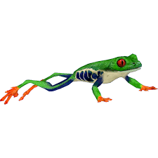 eyed tree frog ztabc team zt2 library wiki