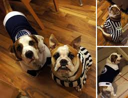 english bulldog halloween costumes our hectic happy halloween