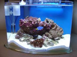 Marine Aquascaping Techniques Pico Aquascape Pico Reefs Nano Reef Com Community
