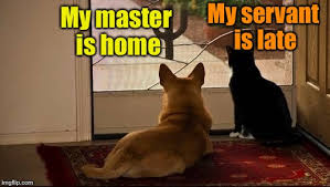 Dog And Cat Memes - the difference between dogs and cats imgflip
