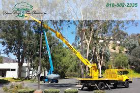 the benefits of professional tree removal in los angeles your