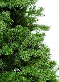 7 5 foot king douglas fir shape tree unlit