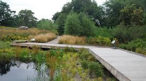 native wetland plants nybg native plant garden u2013 urbanflora