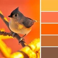 Best Colors With Orange Best 25 Orange Color Schemes Ideas On Pinterest Blue Orange