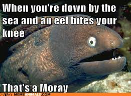 Eel Meme - when down by the sea and an eel bites your knee that s a moray