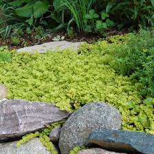 Best Plants For No Sunlight 10 Great Groundcover Plants Bhg Com Better Homes And Gardens